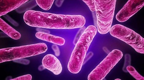 как использовать бактерии