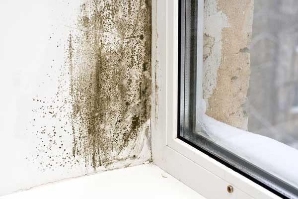 Грибок на пластиковых окнах