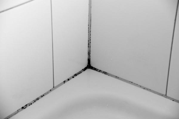 грибок в ванной комнате на швах плитки