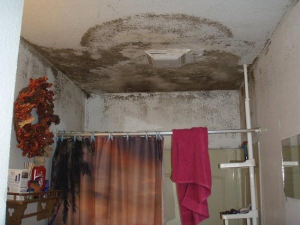 Как избавиться от плесени в ванной комнате в домашних условиях